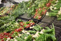Vegetables groceries produce